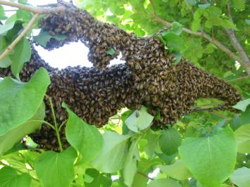 Swarm 4
